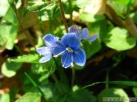 kwiat_326