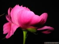 kwiat_334