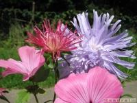 kwiat_354