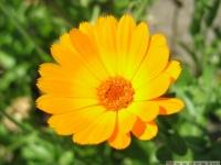 kwiat_358