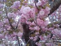 kwiat_360
