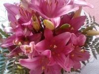 kwiat_361