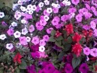 kwiat_363