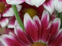 kwiat_374