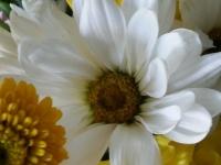 kwiat_378