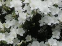 kwiat_380