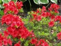 kwiat_384