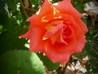 kwiat_391