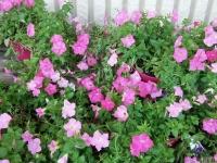 kwiat_394
