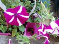 kwiat_395