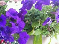 kwiat_396