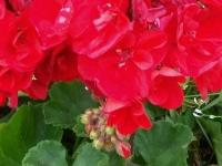 kwiat_403