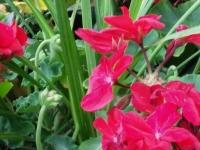kwiat_405