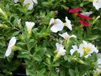 kwiat_408