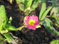 kwiat_413