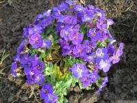 kwiat_414
