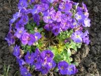 kwiat_415