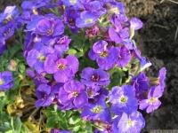kwiat_416