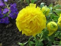 kwiat_417