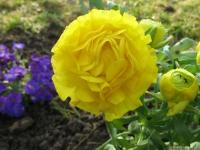 kwiat_418