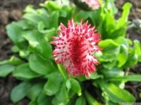 kwiat_420