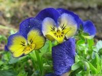 kwiat_422