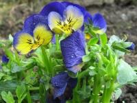 kwiat_423