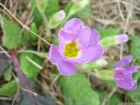 kwiat_427
