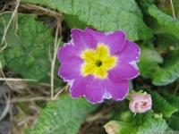kwiat_428