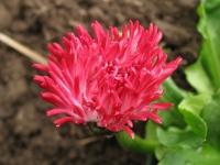 kwiat_430