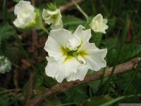 kwiat_431