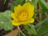 kwiat_432