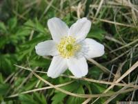 kwiat_433