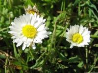 kwiat_437