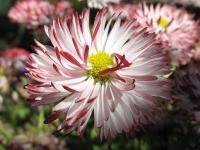 kwiat_441