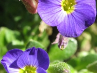 kwiat_447