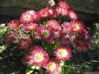 kwiat_448