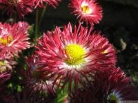 kwiat_449