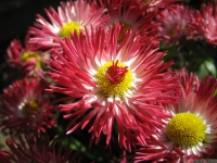 kwiat_450