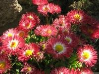 kwiat_451