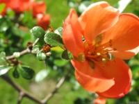 kwiat_453
