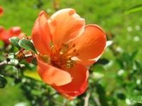kwiat_454