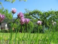 kwiat_457