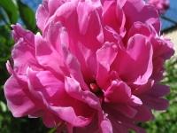 kwiat_461