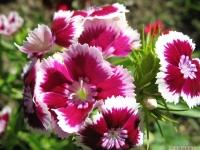 kwiat_464