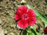 kwiat_466