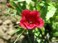 kwiat_467