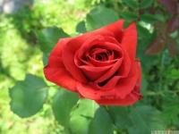 kwiat_469