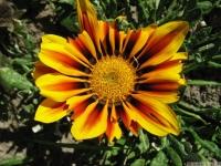 kwiat_471