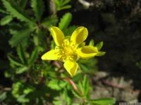 kwiat_472